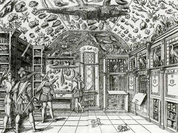 Wunderkammer 1599
